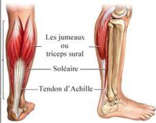 Muscles du mollet - Source [4]